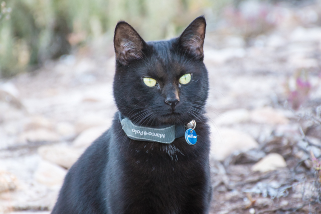Best pet trackers cats - Marco Polo