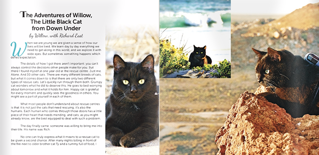 9b59837a60 You can now read little Willow s story featured as 7 pages of black cat  glory as part of the all new full colour book Black Cats Tell All  True  Tales and ...
