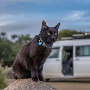 76b78e4950201c Rich - Van Cat Meow