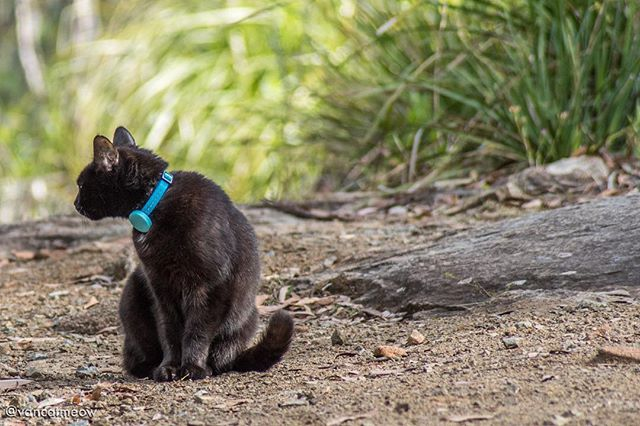 Find the best pet tracker for your cat - Van Cat Meow