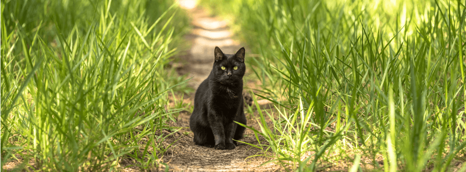 Find The Best Pet Tracker For Your Cat Van Cat Meow